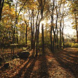 IRENE JONES – Cwm Taf, Merthyr Tydfil